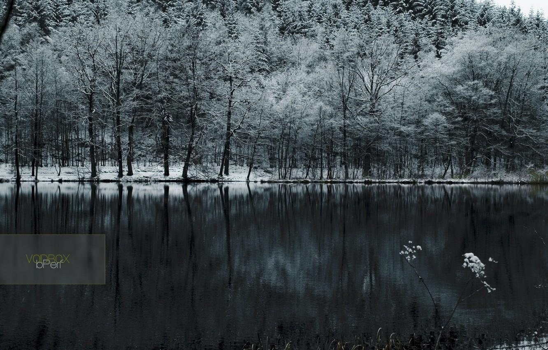 Фото обои холод, лес, снег, озеро