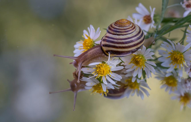 Фото обои макро, цветы, отражение, улитка