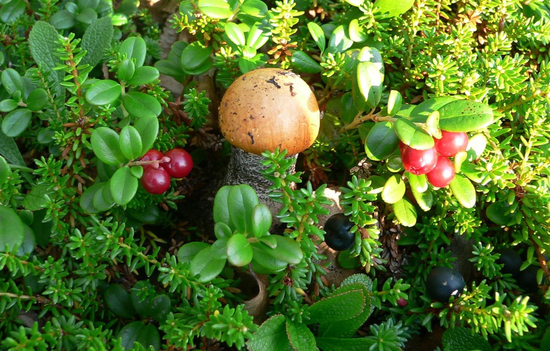Посмотреть фото ягоды и грибы в карелии