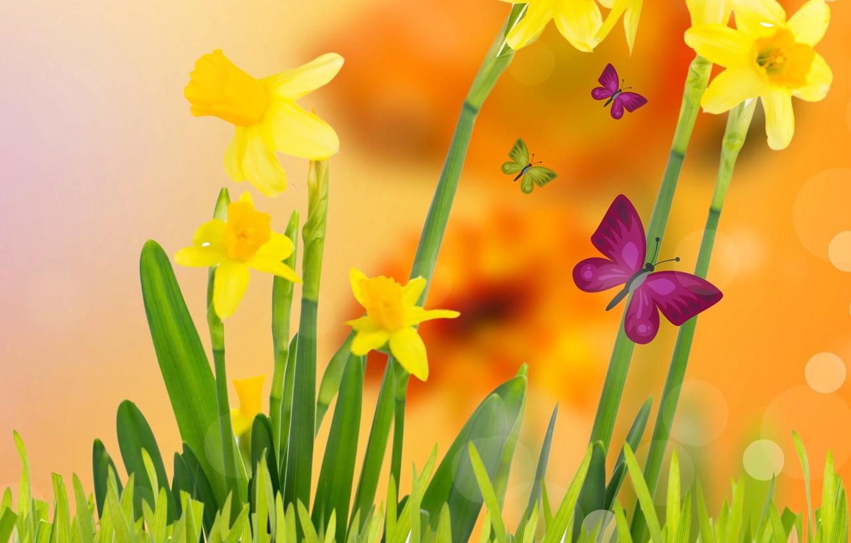 Фото обои трава, бабочки, цветы, весна, желтые, луг, цветение, yellow, flowers, нарциссы, spring, meadow, butterflies