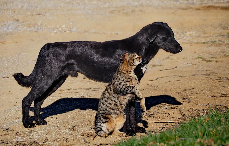О картинки кошек и собака