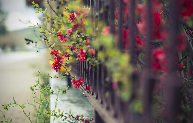Обои забор, улица, цветы. Города foto 8