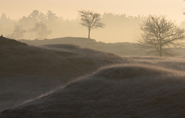 Обои туман, утро. Пейзажи foto 11