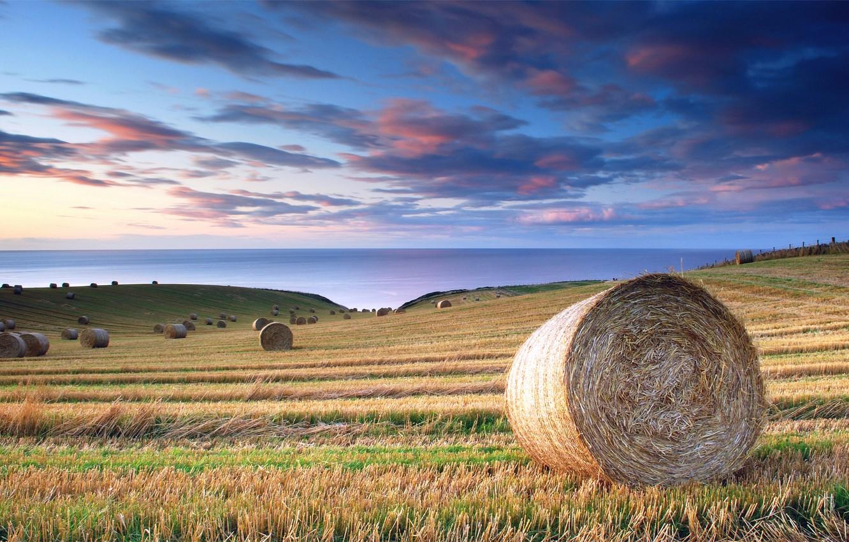 Фото обои море, поле, лето, небо, облака, синева, Италия, штиль, роллы