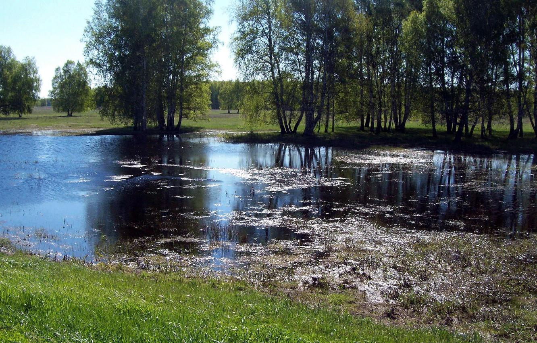 Фото обои вода, природа, Весна, берёзы, половодье