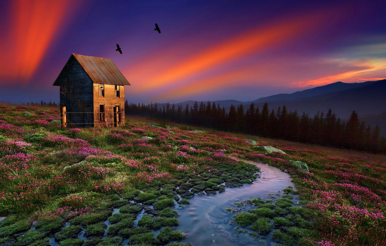 Фото обои вода, пейзаж, птицы, природа, дом, кочки