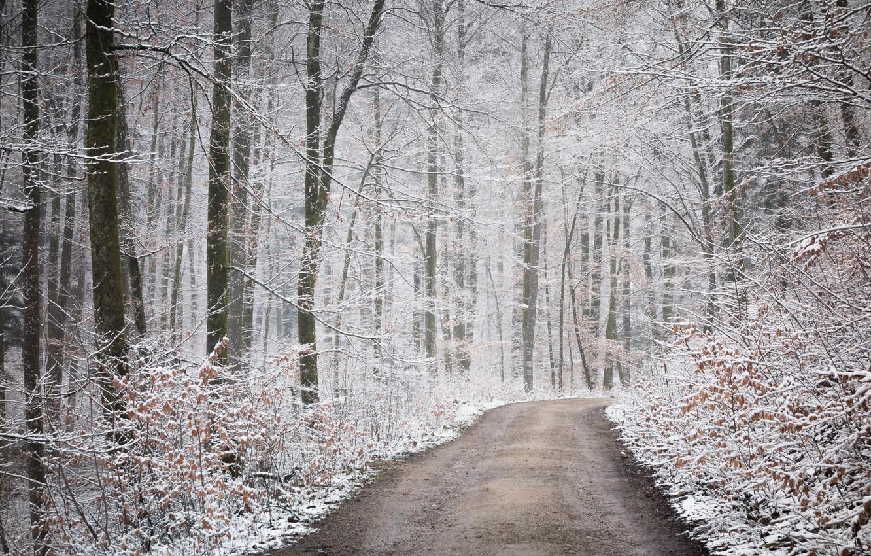 фото снежный ноябрь свадьба