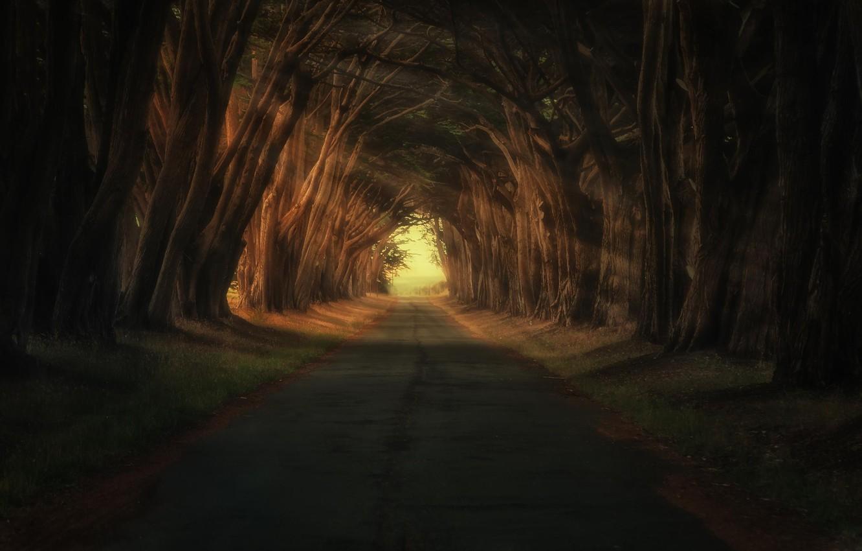 Фото обои дорога, свет, деревья, природа