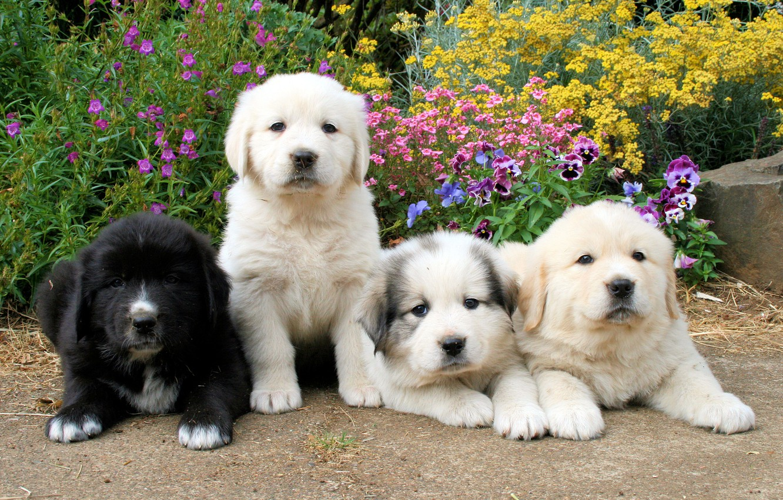 Щенки собаки фото