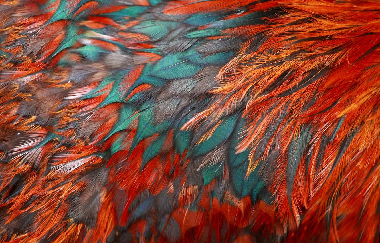 Фото обои птица, текстура, перья, окрас