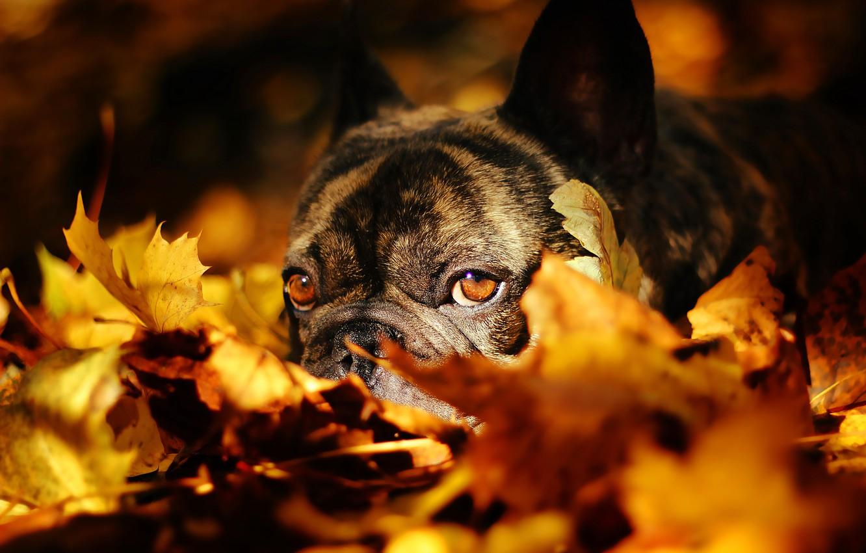 осень на носу картинка зеленая