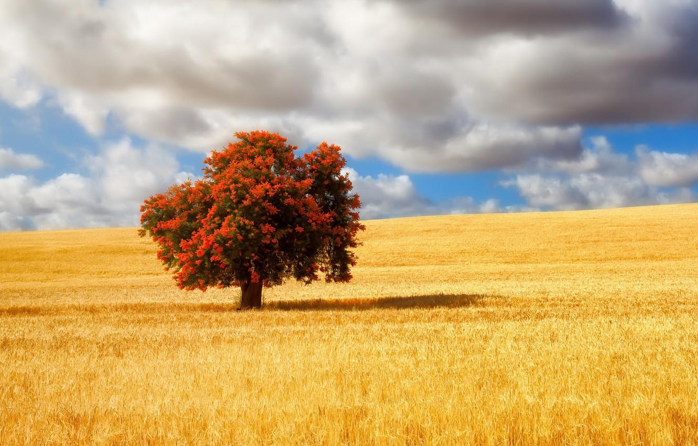 Фото обои поле, лето, дерево