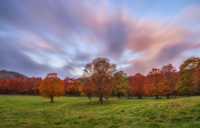 Фото обои небо, трава, облака, деревья, поляна, Осень