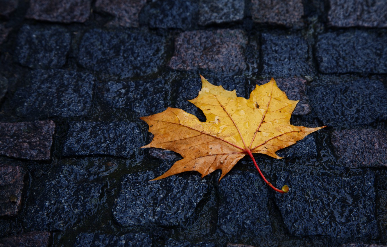 Фото обои желтый, лист, Осень, брусчатка, лежит, капли дождя