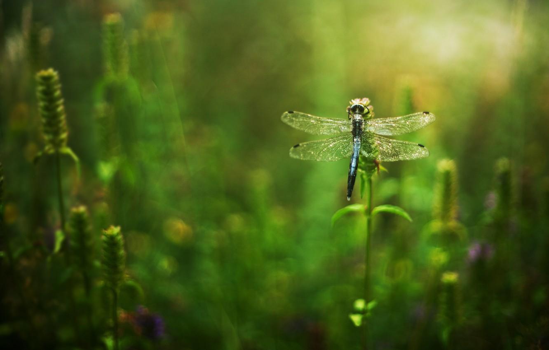 Фото обои трава, цветы, стрекоза
