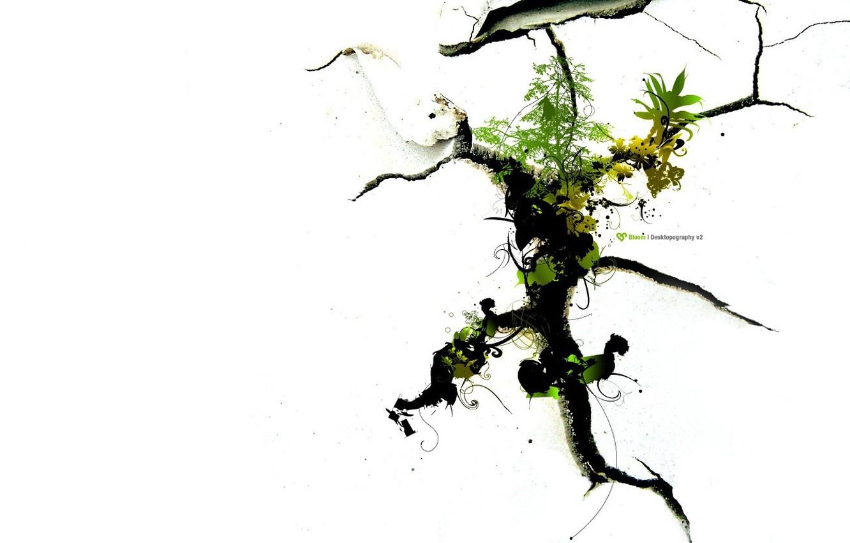 Фото обои жизнь, корни, ростки, упрямство, трещины