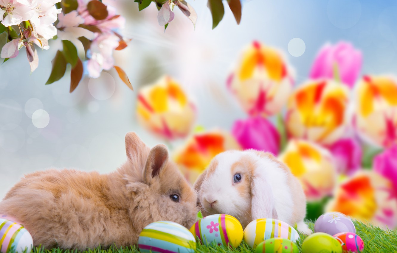 Обои Easter, пасхальные яйца, Happy easter, яйца. Праздники foto 7