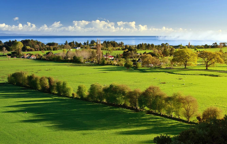 Фото обои море, зелень, трава, деревья