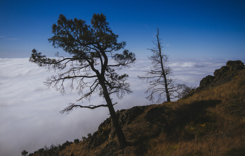 Фото обои облака, деревья, природа, вершина