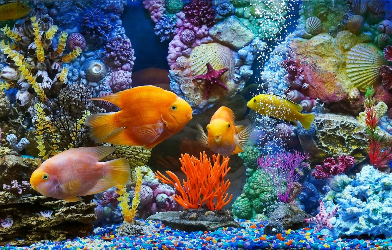 Фото обои рыбки, рыбы, аквариум, кораллы, ракушки