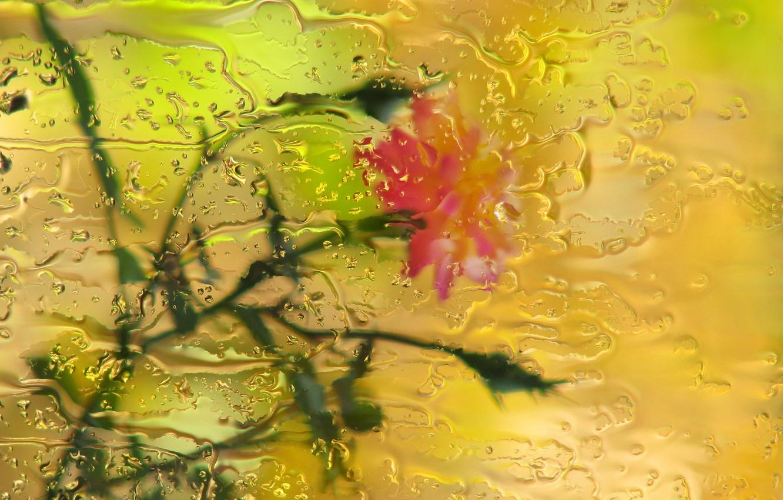 Фото обои стекло, капли, цветы, дождь, роза, боке