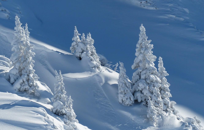 Фото обои зима, снег, природа, ели, сугробы