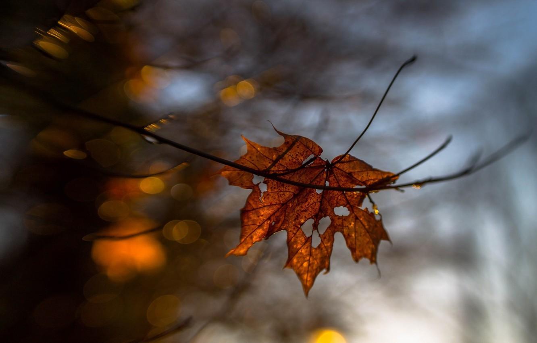 Фото обои осень, макро, лист, жёлтый, размытие, сухой