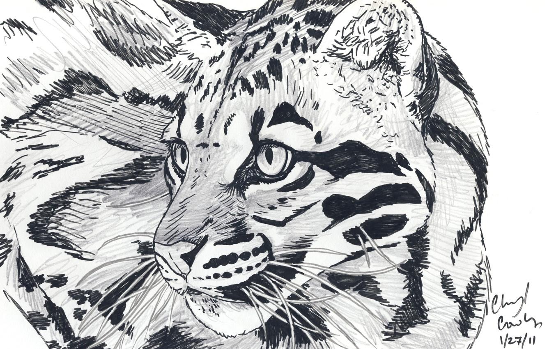 Фото обои глаза, усы, взгляд, животное, хищник, арт, леопард, карандаш