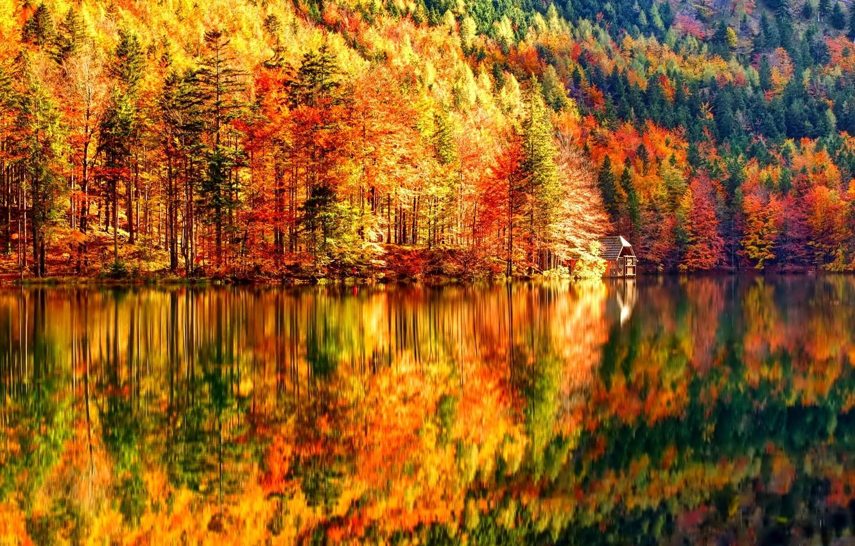 Фото обои осень, лес, деревья, озеро, склон, домик