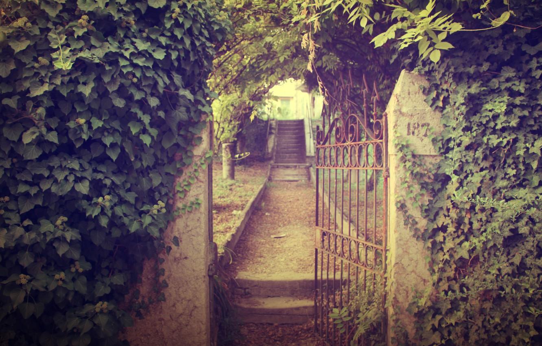 Фото обои дорога, листья, природа, стена, растения, ворота, сад, ступени, тропинка, калитка, плющ
