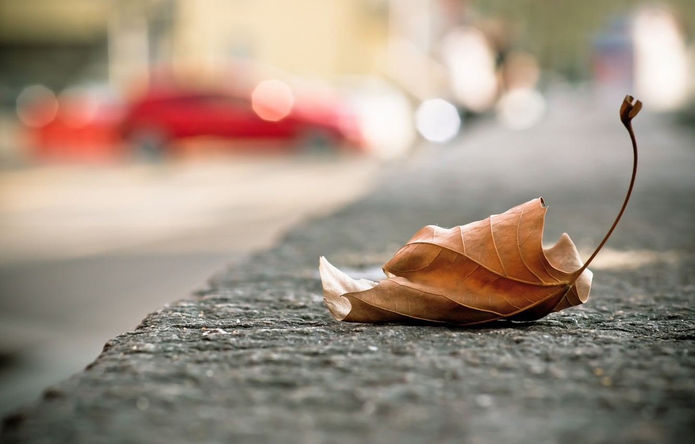 Фото обои город, лист, улица, опавший, осенний