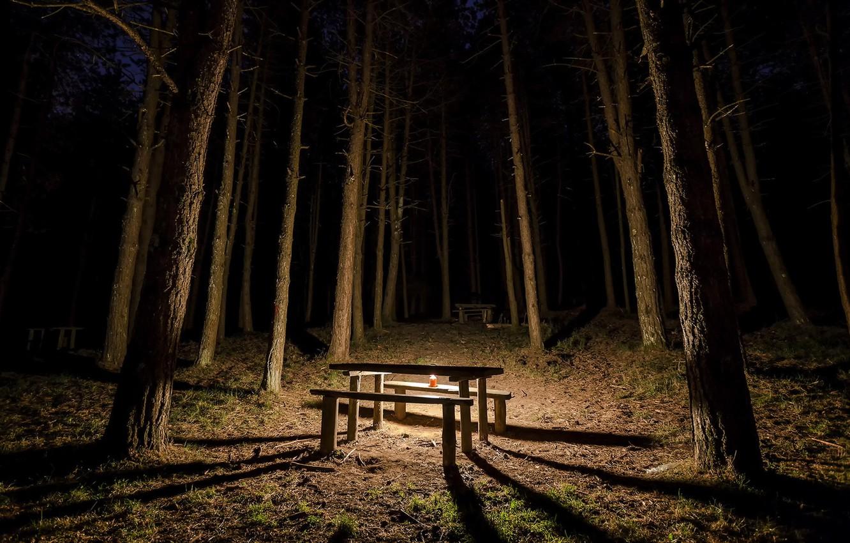 Фото обои лес, ночь, стол, свеча, скамья
