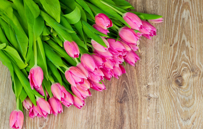 Фото обои цветы, тюльпаны, fresh, pink, flowers, tulips, spring