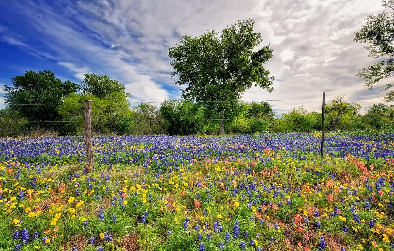 Фото обои небо, цветы, природа, весна