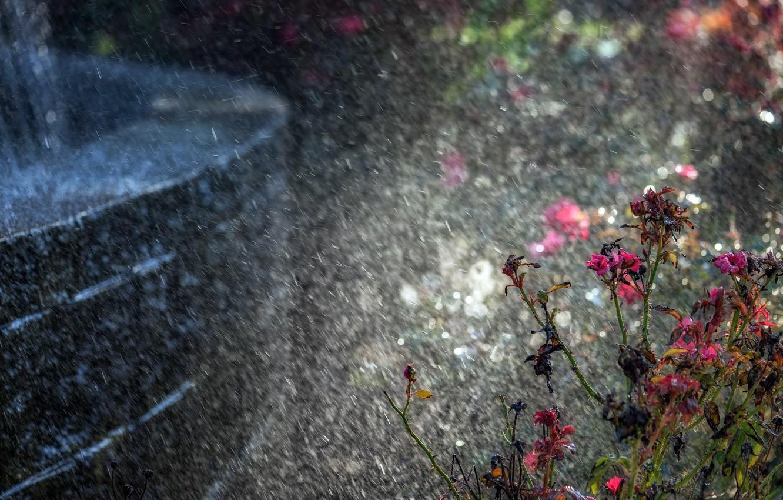 фото красивых цветов и дождь были отправлены две