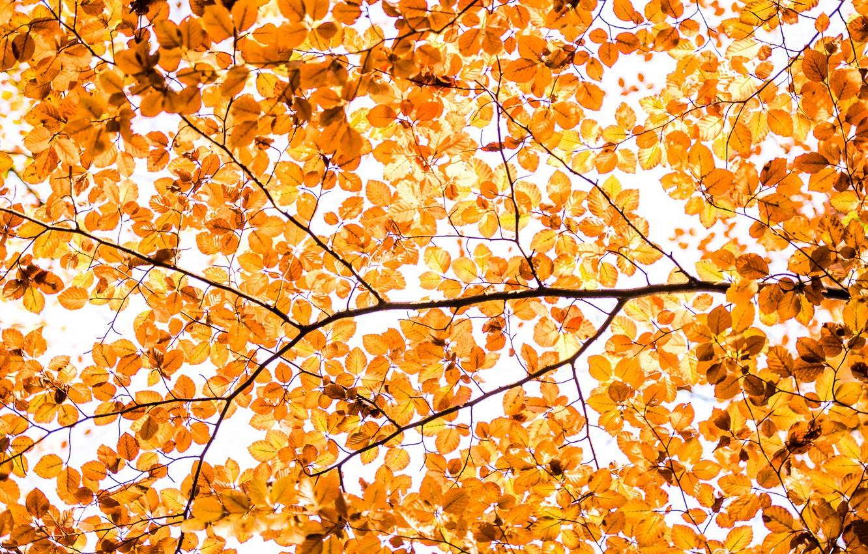 Фото обои осень, листья, ветки, дерево, краски, текстура