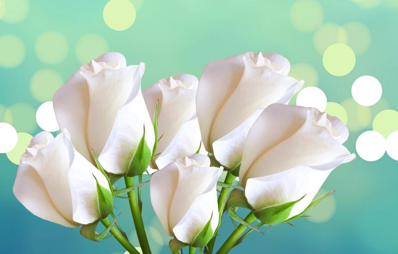 Фото обои розы, букет, лепестки, блик
