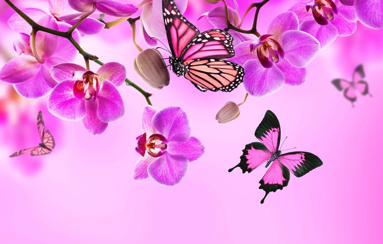Фото обои бабочки, цветы, орхидея, pink, blossom, flowers, beautiful, orchid, butterflies