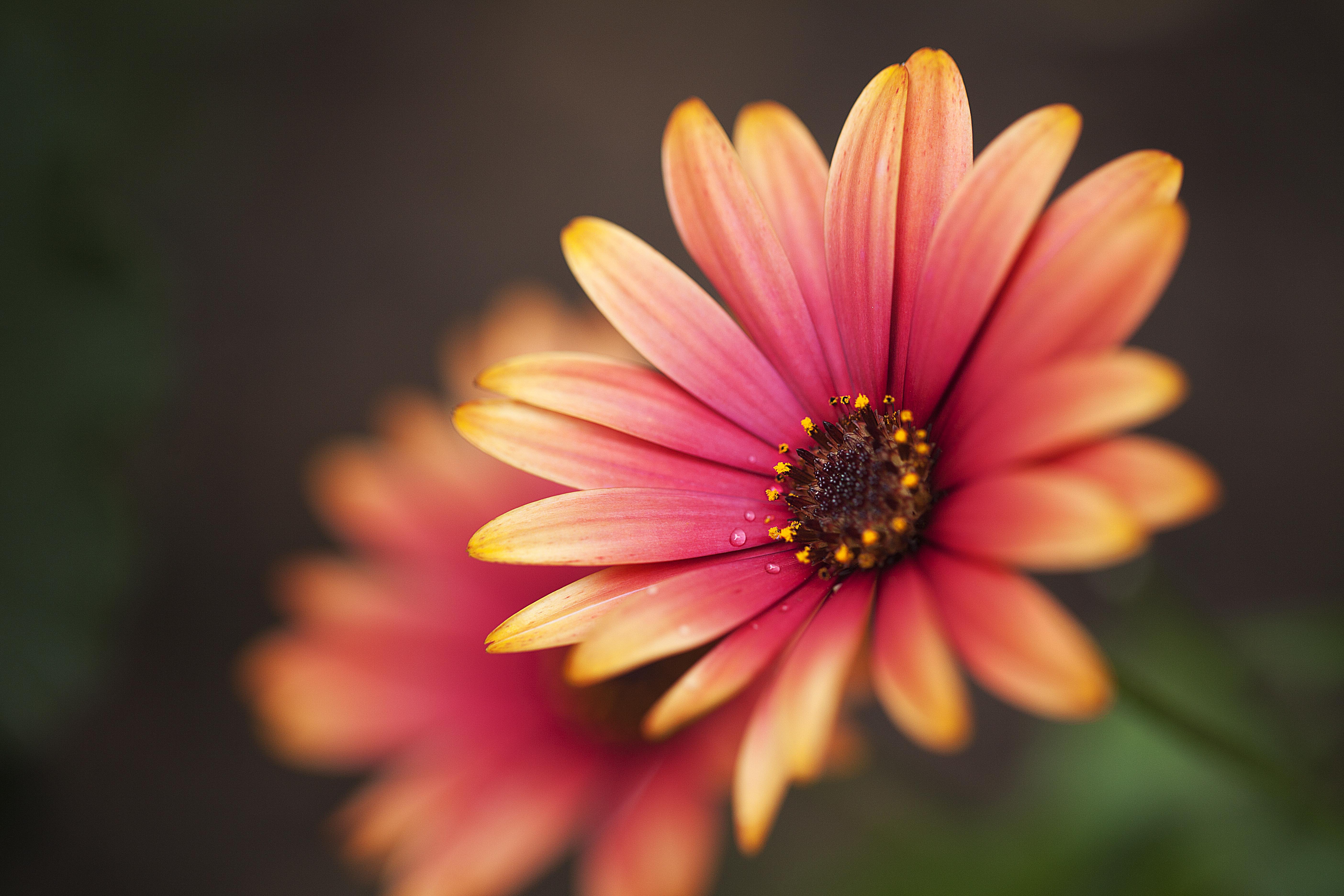 фото цветы формата самых