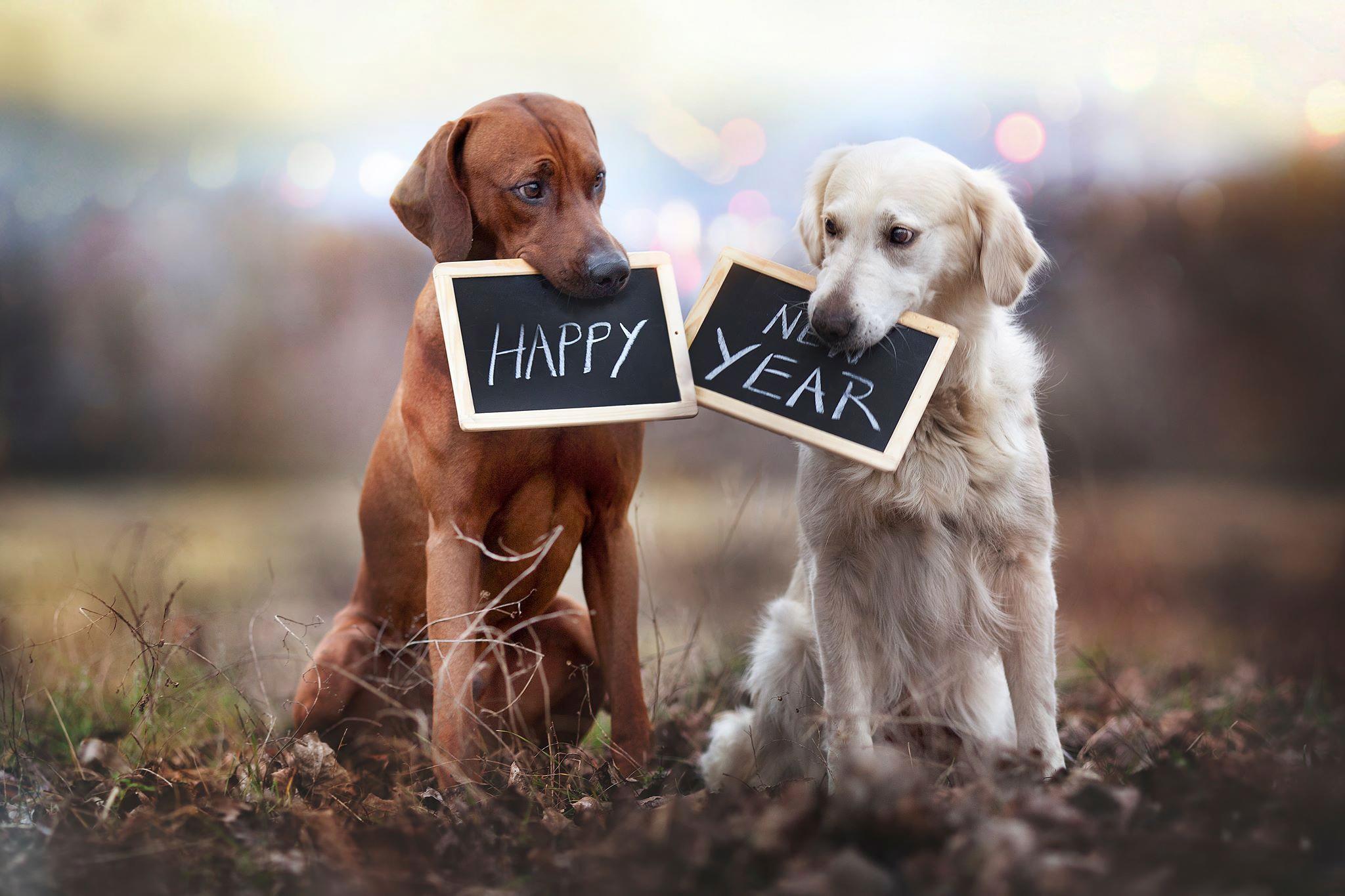 Поздравления днем, открытка друг собака