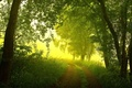 Картинка дорога, лес, лето, деревья, туман, утро