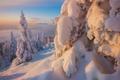 Картинка зима, лес, снег, природа, ели