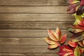 Картинка pattern, leaves, wood, autumn