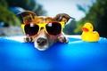 Картинка морда, собака, утка, солнечные очки