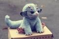 Картинка дракон, my little dragon, by santani, коробка