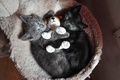 Картинка игрушка, котята, обнимашки