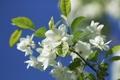 Картинка цветки, яблоня, ветка, макро, природа, боке, цветение, весна