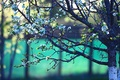 Картинка цветки, дерево, боке, весна, ветки, цветущее