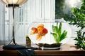 Картинка Аквариум, золотая рыбка, водоросли, перчатки, окно