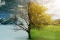 Картинка зима, осень, природа, времена года, красота